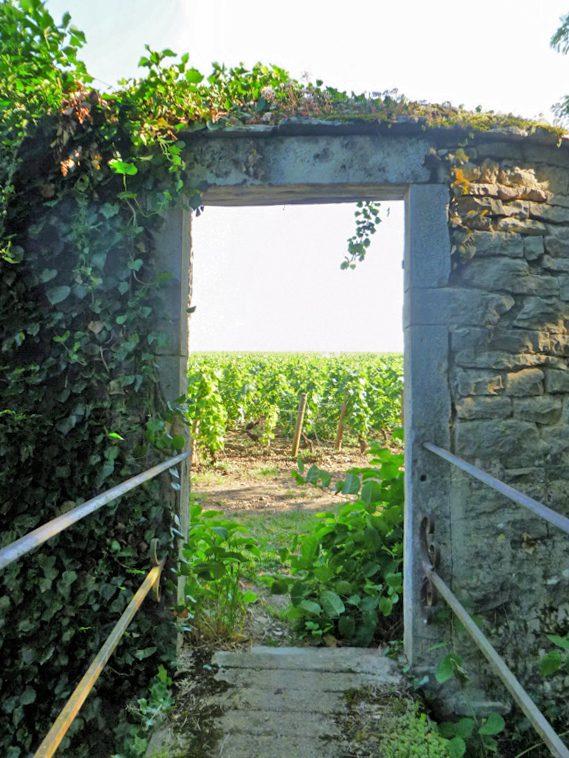 Doorway-to-Vines-in-Pommard